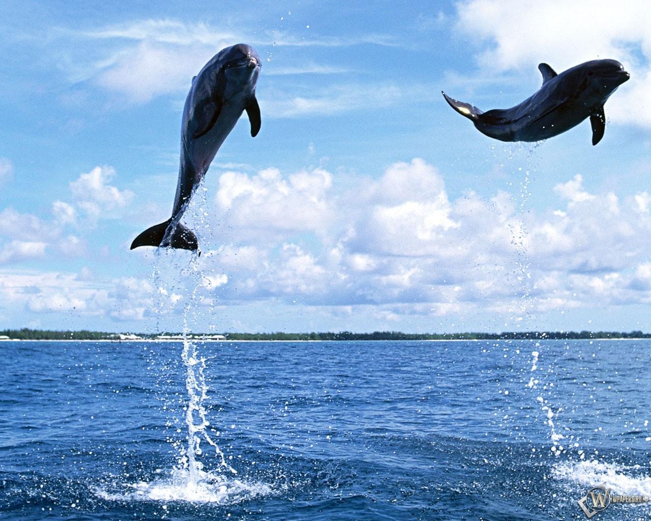 Прыгающие дельфины 1280x1024
