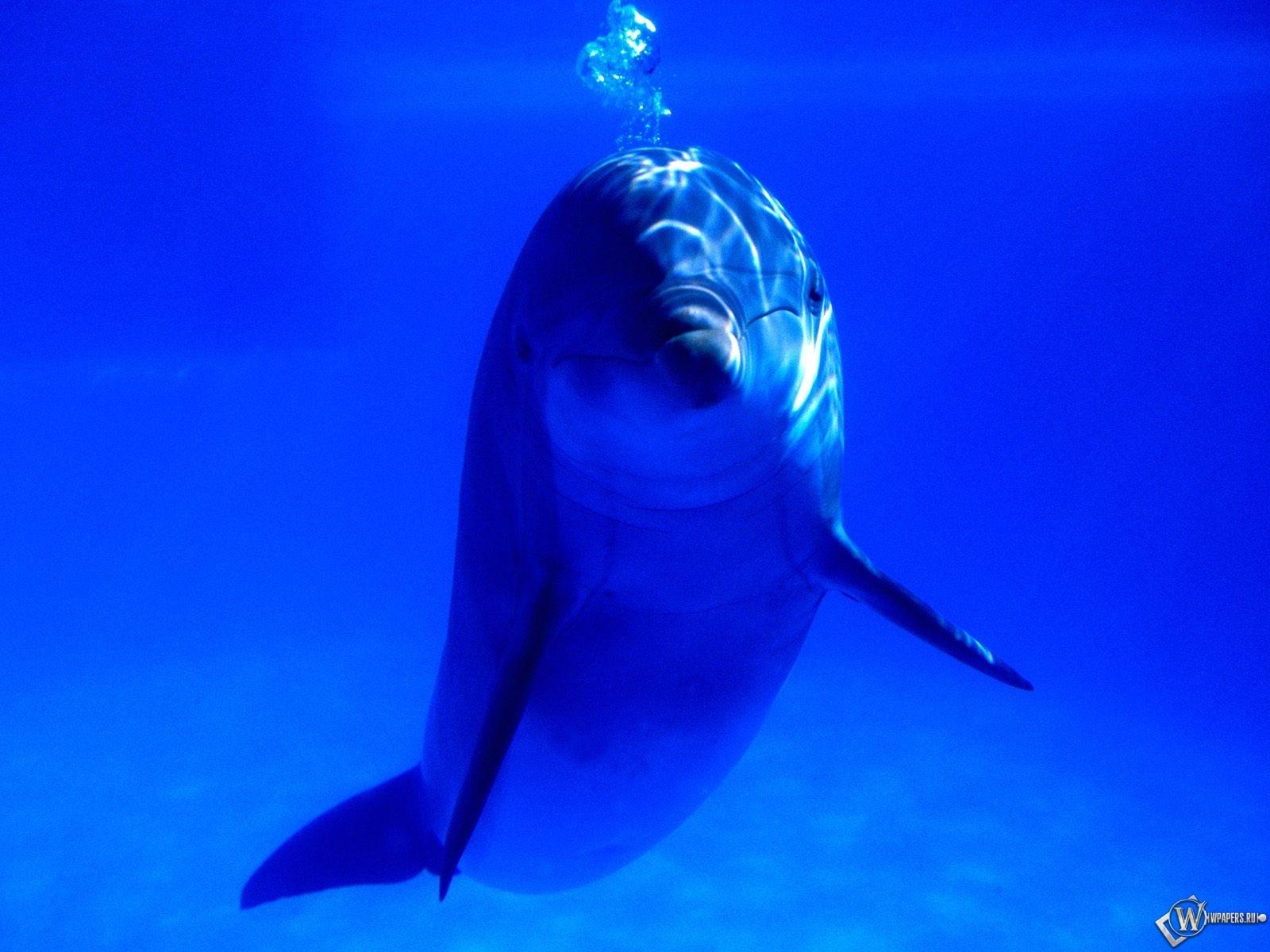 Дельфин и пузыри 1600x1200