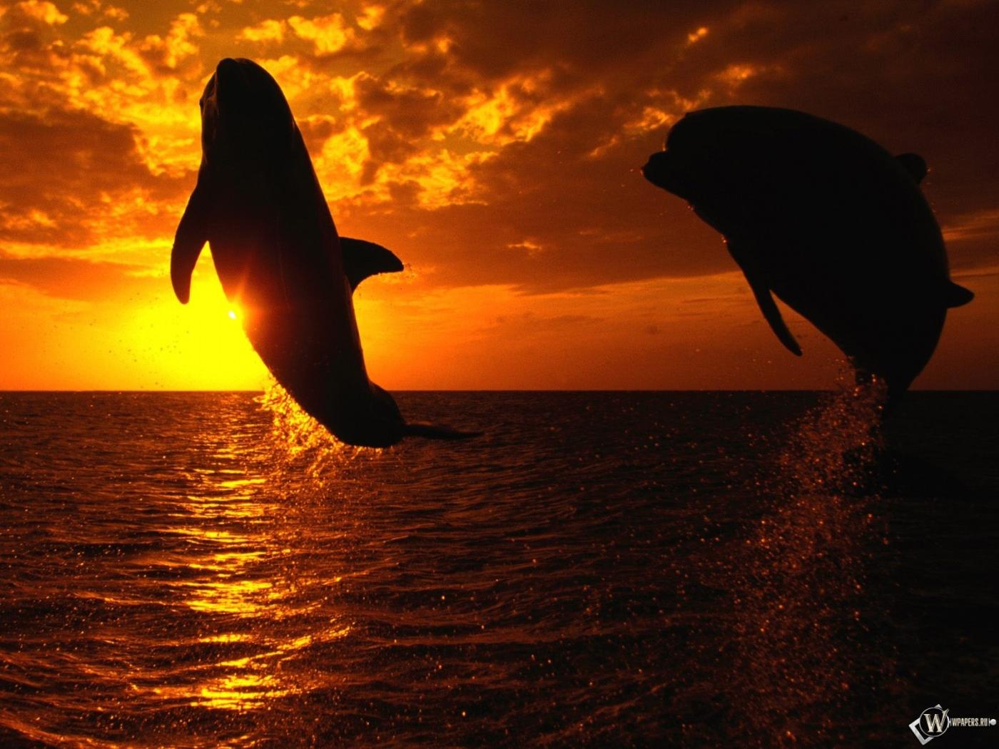 Закат небо дельфины 1400x1050 картинки
