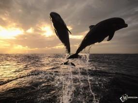 Обои Прыгающие дельфины: Вода, Море, Прыжок, Дельфины, Дельфины