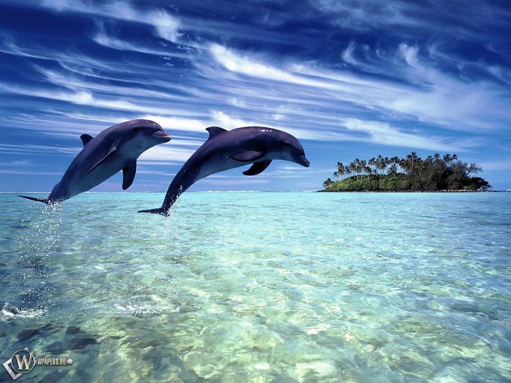 Обои дельфины в прыжке на рабочий стол