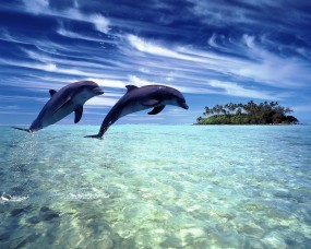Обои Дельфины в прыжке: Море, Остров, Прыжок, Дельфины, Дельфины