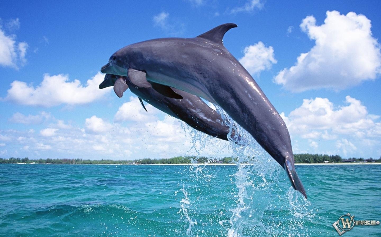 Дельфины в прыжке 1440x900