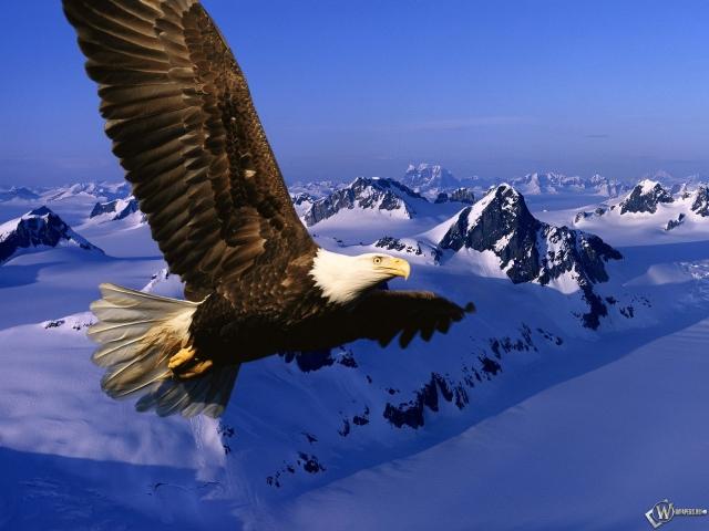 Орел на фоне гор