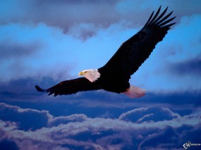 Обои Орел в небе: , Орлы