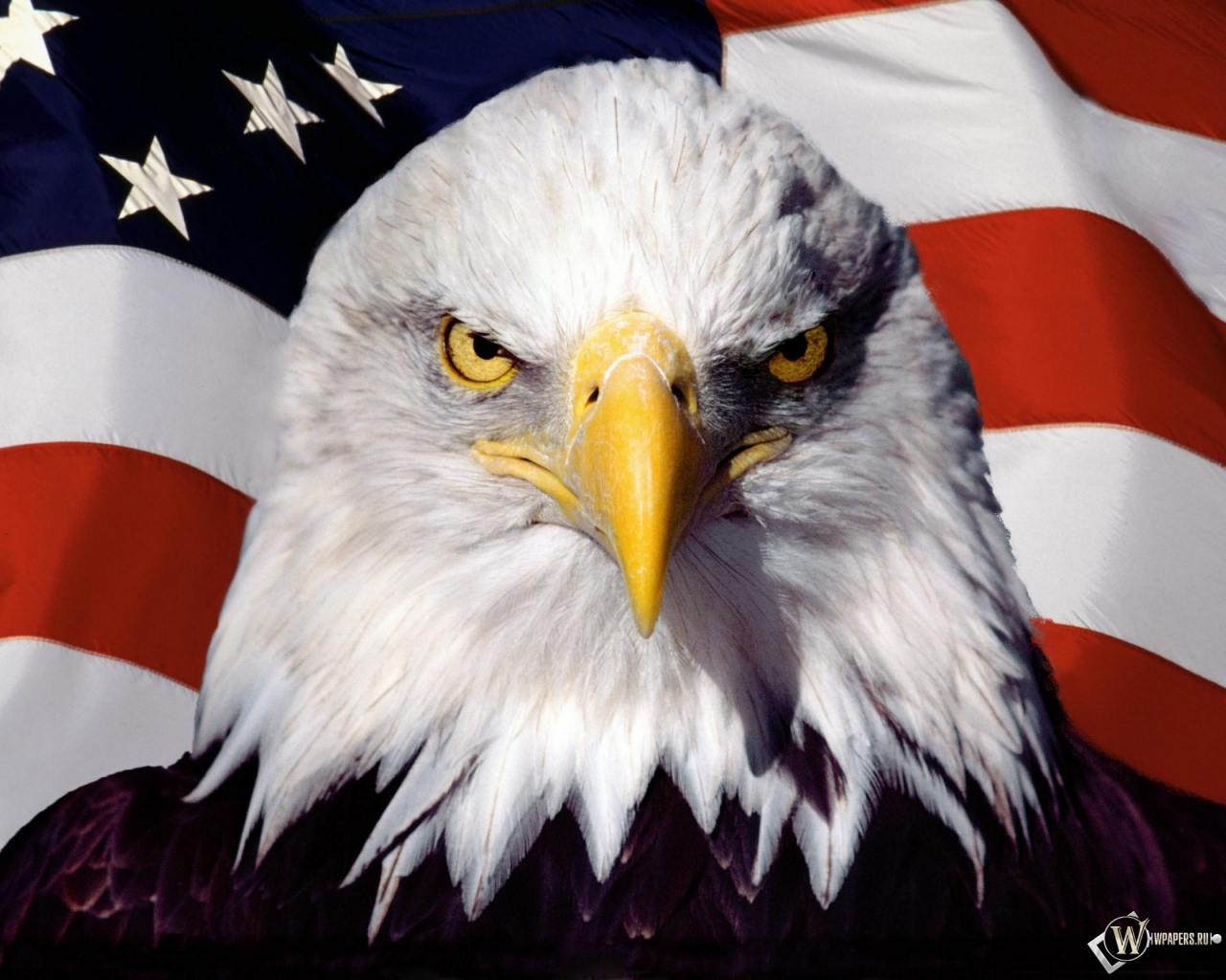 Обои орел на фоне флага на рабочий