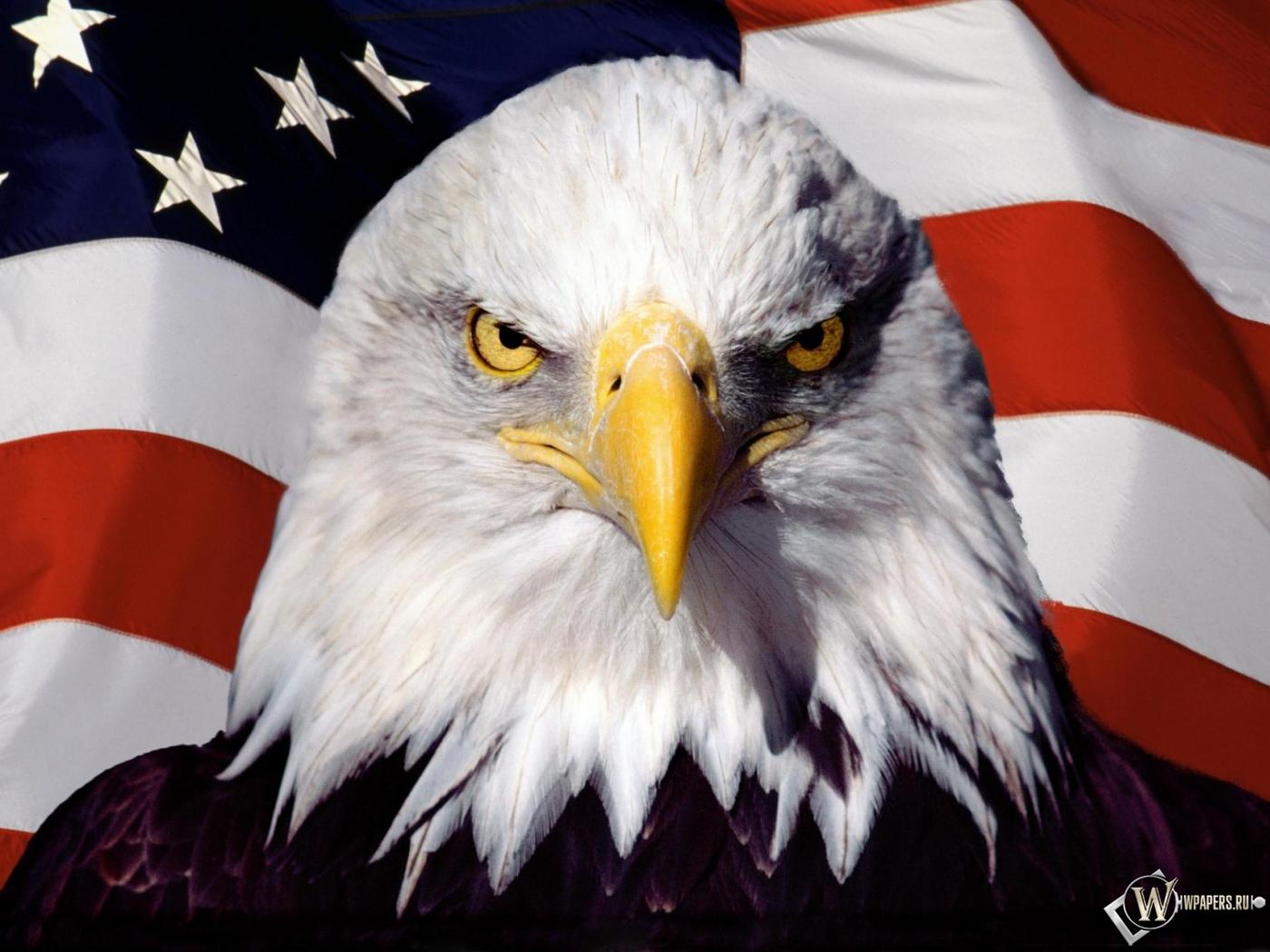Орел на фоне флага на рабочий стол с