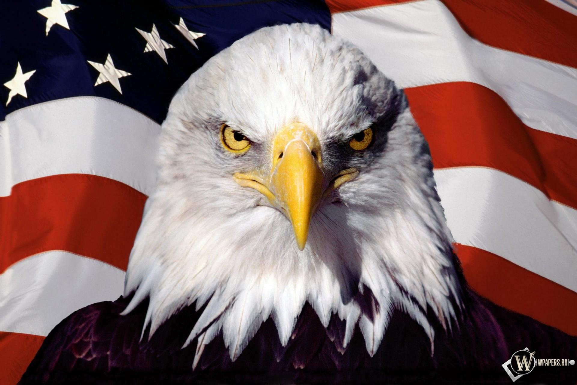Орел на фоне флага 1920x1280