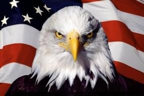 Обои Орел на фоне флага: Птица, Орёл, Флаг, Америка, США, Орлы
