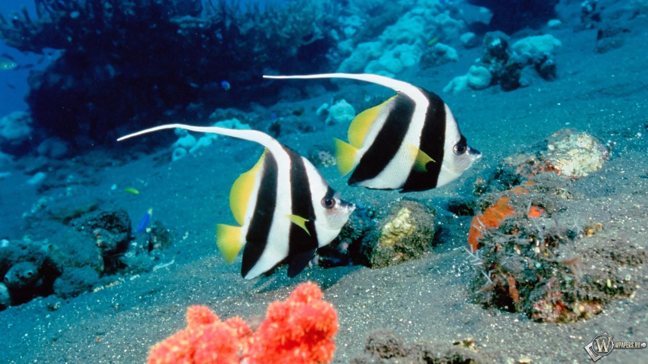Ocean Life 2560x1440