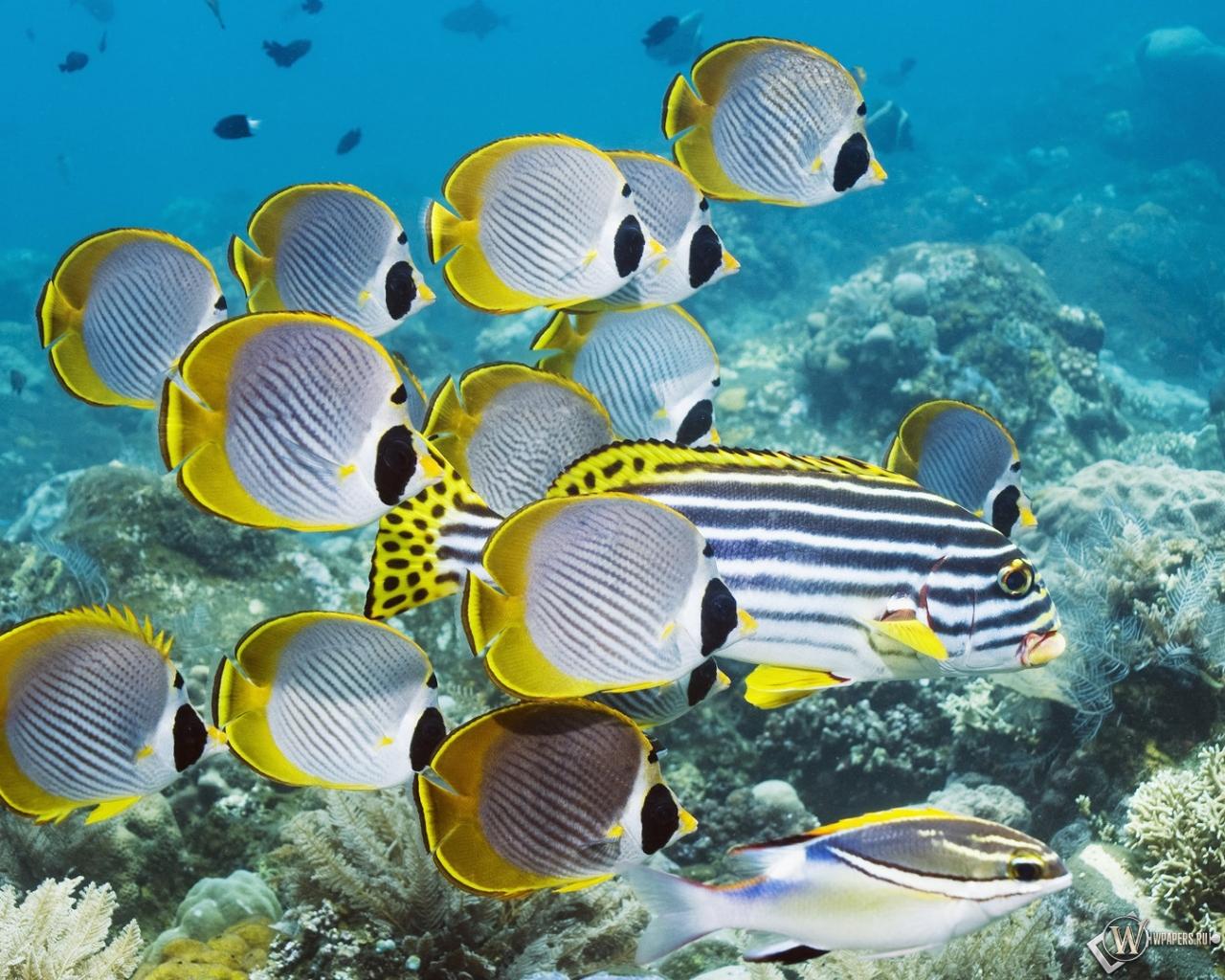 Подводный мир 1280x1024