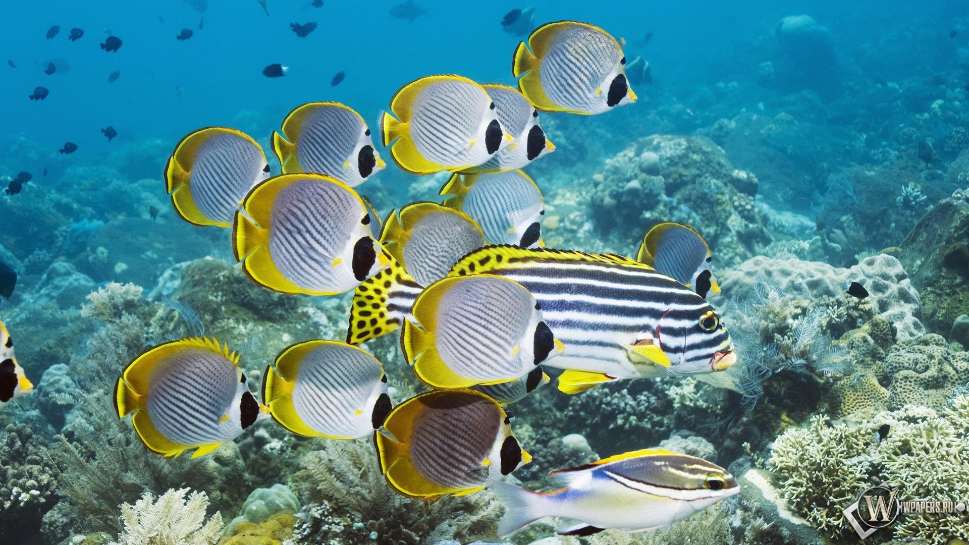 Обои подводный мир океан рыбы