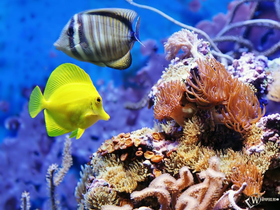 Рыбки аквариум рыбки 1152x864 картинки