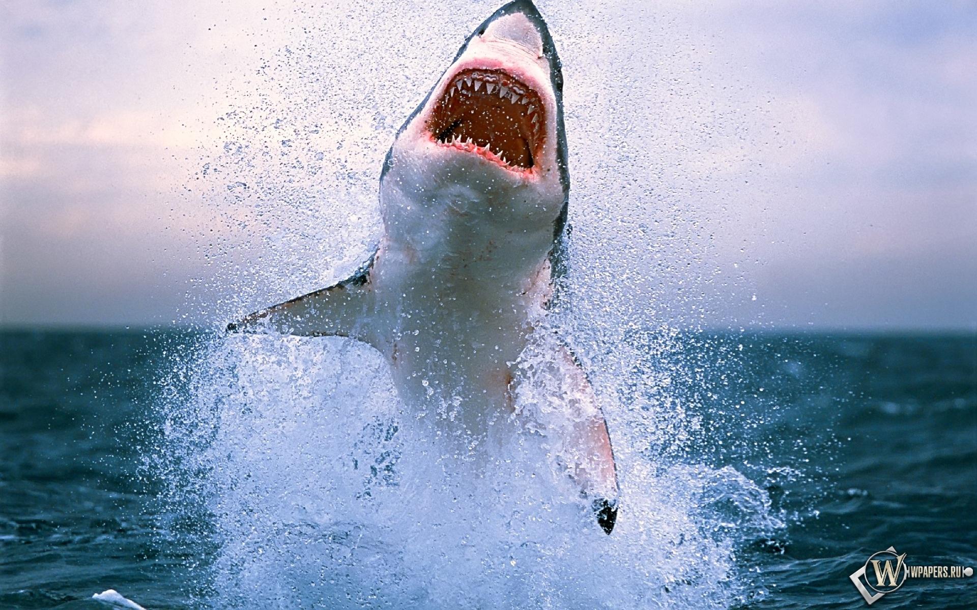 Акула в прыжке 1920x1200