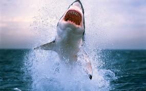 Обои Акула в прыжке: Вода, Море, Зубы, Акула, Рыбы