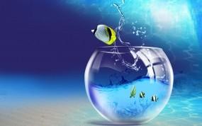 Обои Бирюзовый аквариум: Вода, Аквариум, Рыбки, Рыбы
