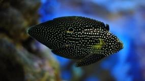 Обои Пёстрая рыба: Океан, Рыба, Рыбы