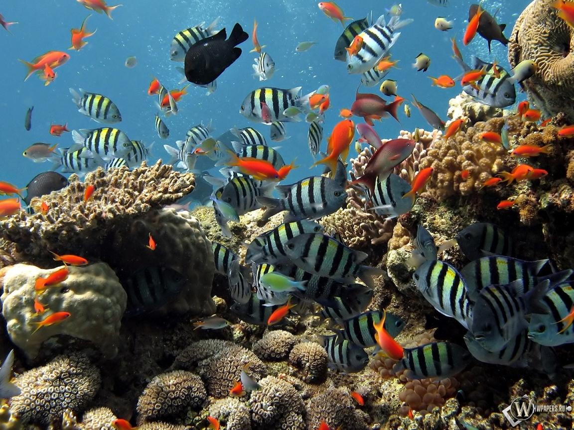 Обои подводный мир шарм эль шейха на