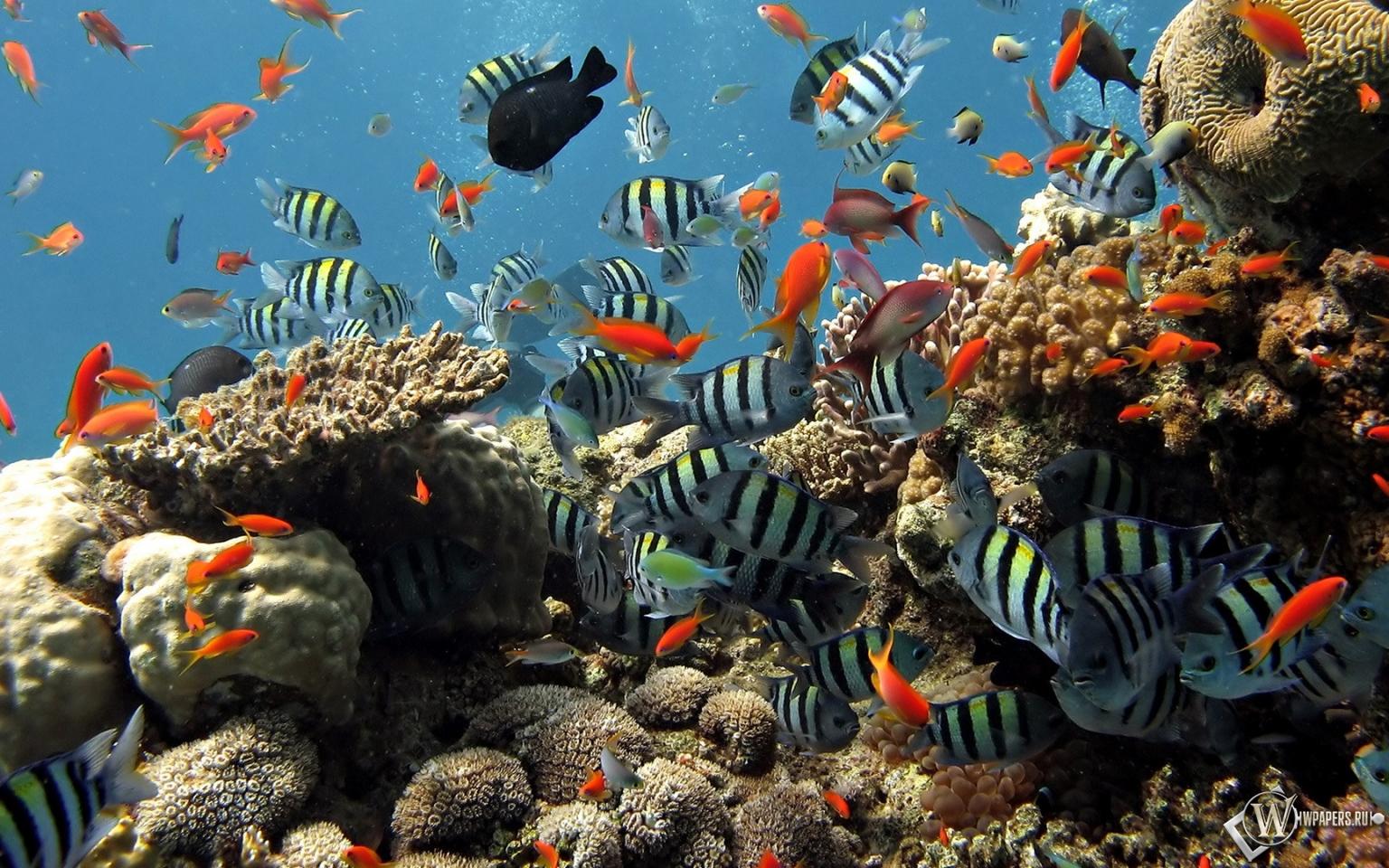 Подводный мир шарм эль шейха 1536x960