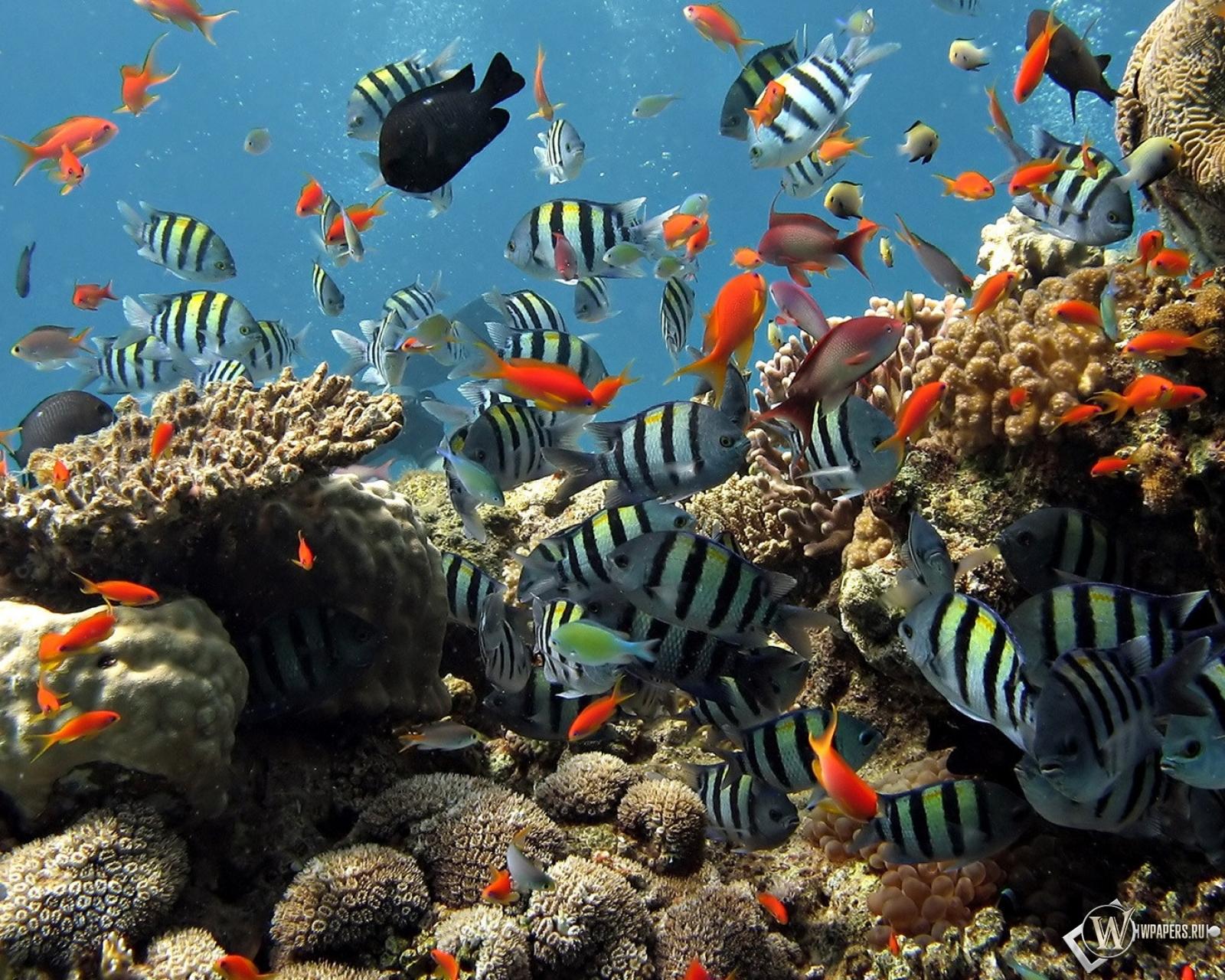 Подводный мир шарм эль шейха 1600x1280