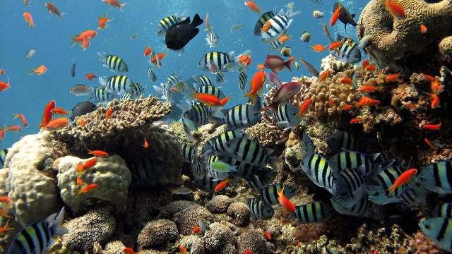 Подводный мир Шарм-эль-Шейха
