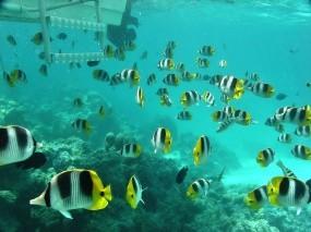 Обои Полосатые рыбки: Вода, Море, Рыбки, Кораллы, Рыбы