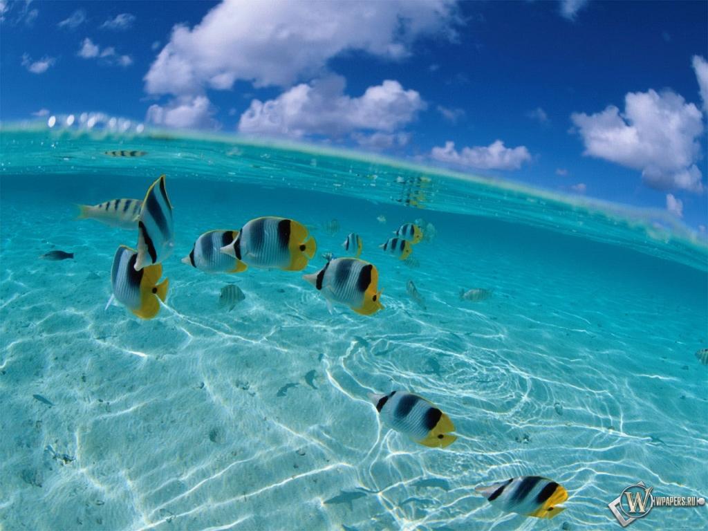 Рыбки вода обоев 360 море обоев 263 рыбки