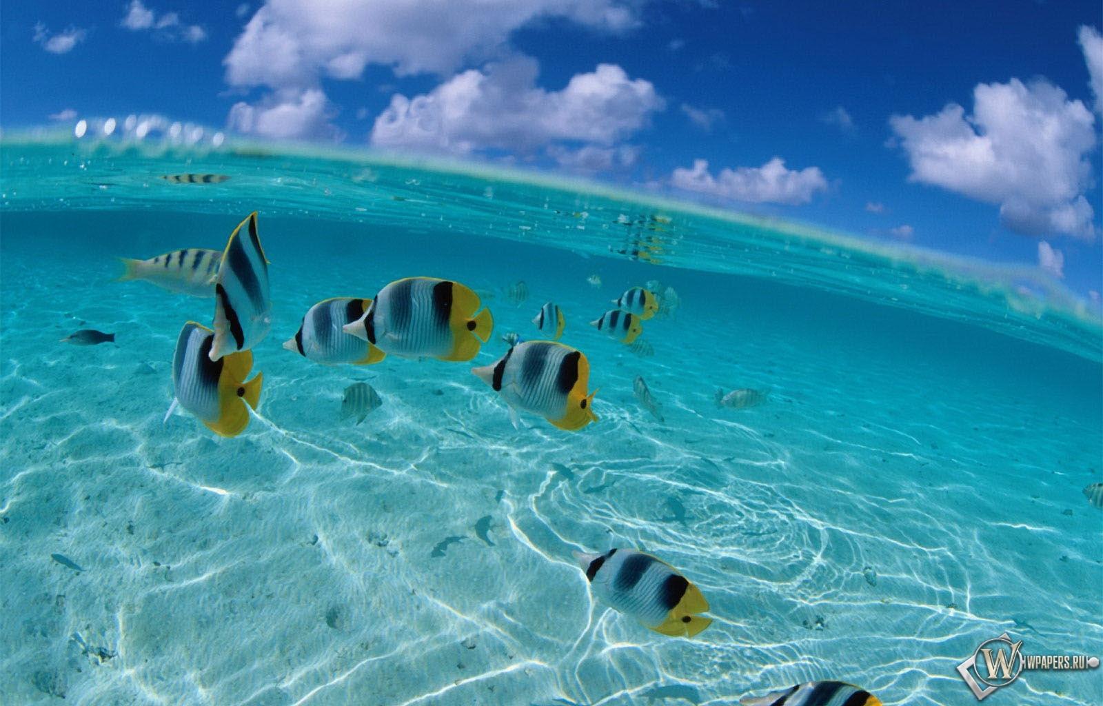 рыбы на рабочий стол