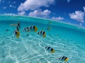 Обои Полосатые рыбки: Вода, Море, Рыбки, Рыбы