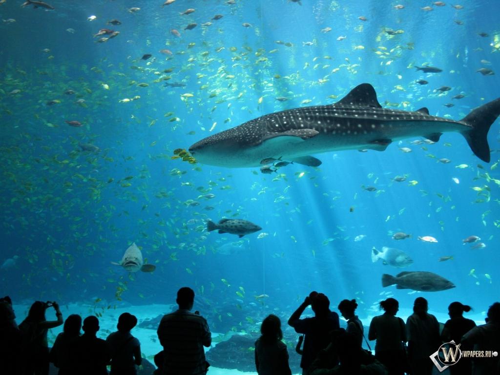 Обои акула в аквариуме на рабочий стол