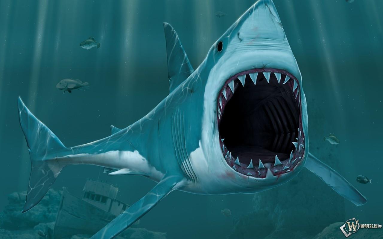 Обои рисованая акула на рабочий стол с