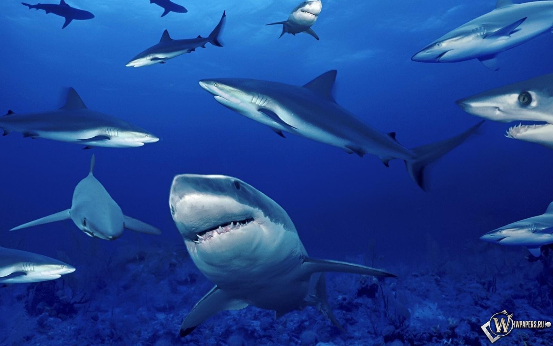 Акулы на глубине 1920x1200