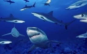 Обои Акулы на глубине: Море, Глубина, Акулы, Рыбы