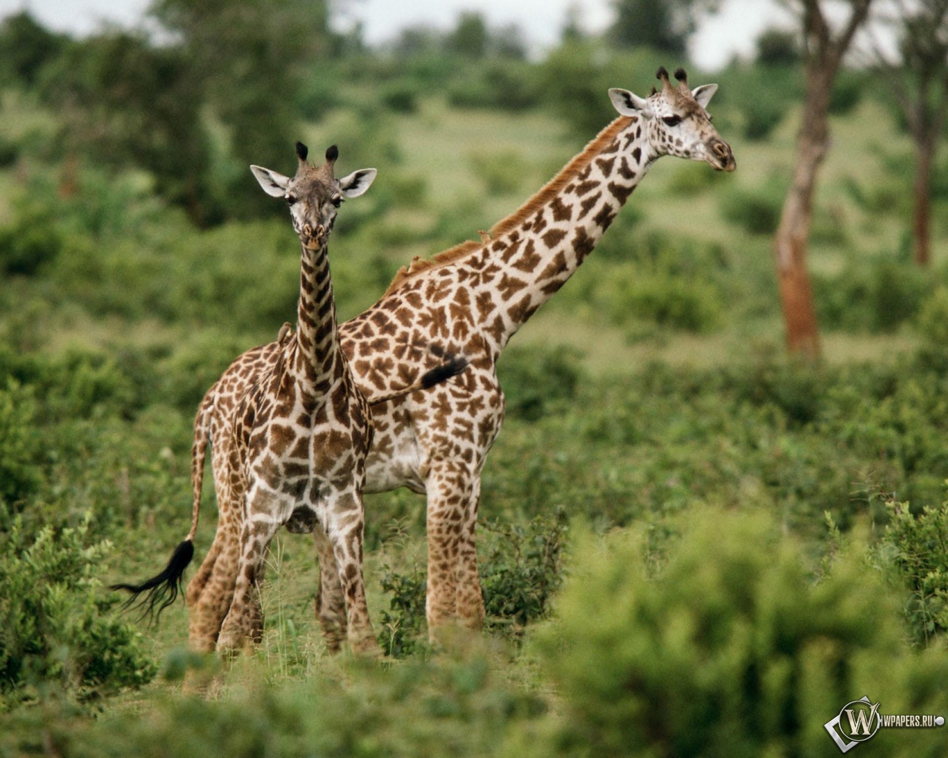 Фото про животных африки 2