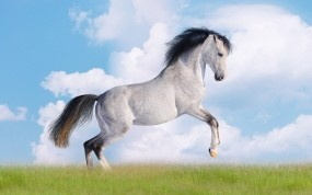Обои Белая лошадь: Облака, Трава, Небо, Лошадь, Лошади