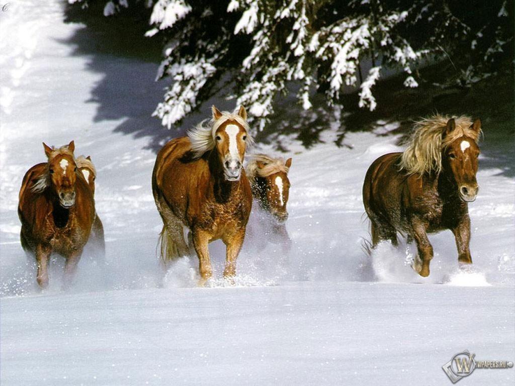 Кони бегут по снегу 1024x768