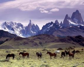 Обои Кони в горах: , Лошади