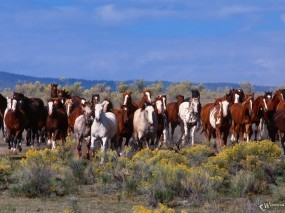 Обои Табун лошадей: Лошади, Табун, Лошади