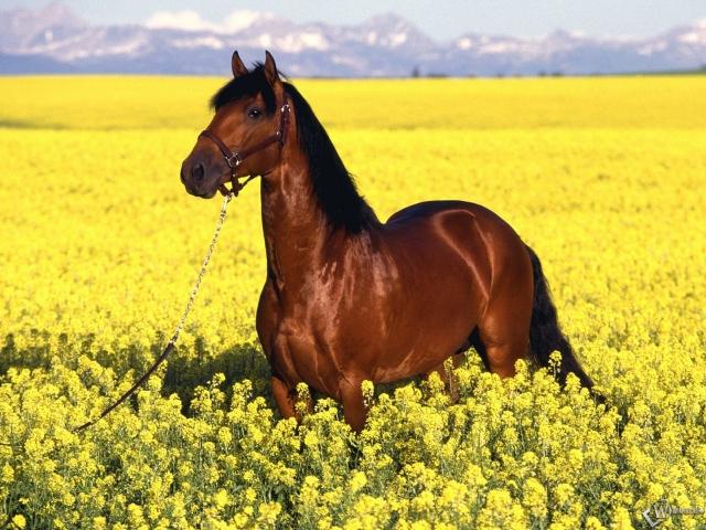 Конь на лугу