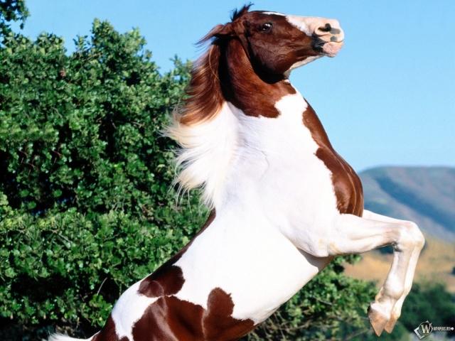 Конь встал на задние лапы