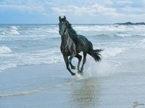 Обои Черный конь бегущий по берегу: Волны, Море, Берег, Вороной конь, Чёрный конь, Лошади