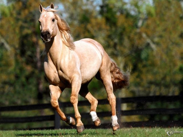 Бегущая белая лошадь