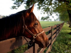 Обои лошадь в загоне: Лошадь, Голова, Лошади
