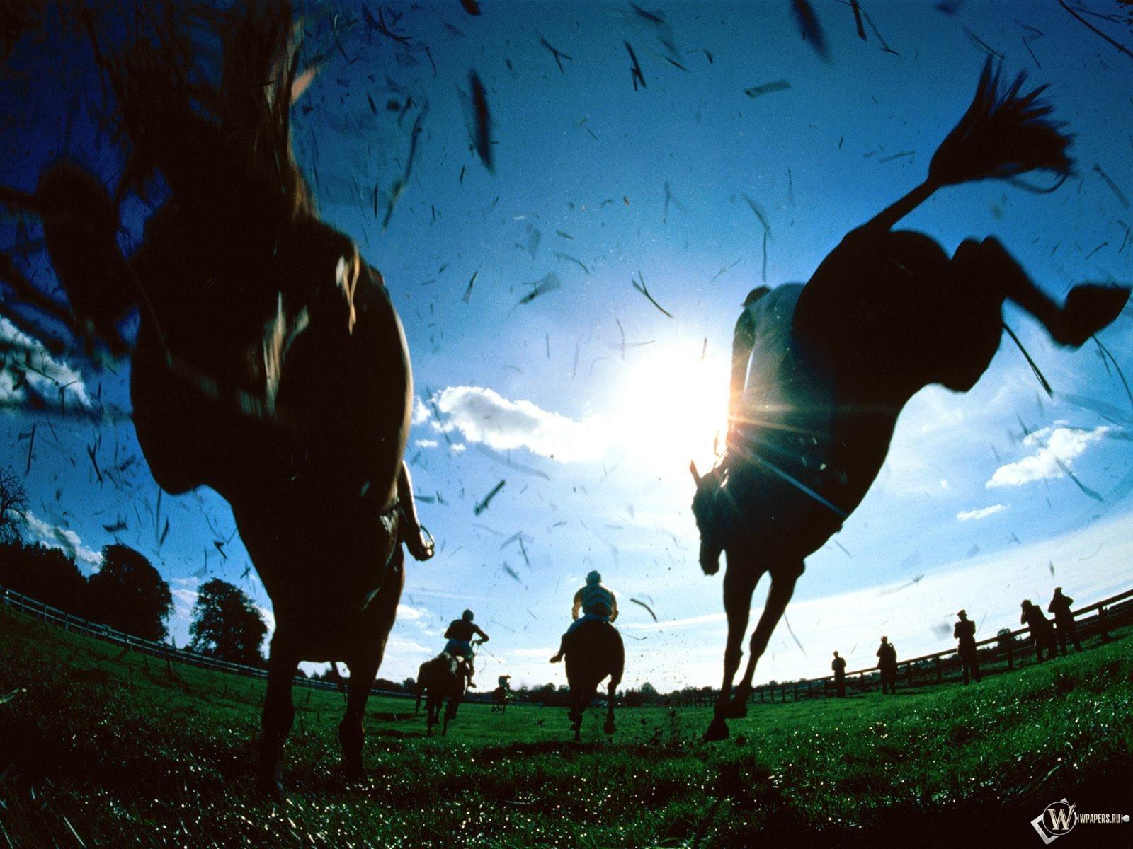 Наездники на лошадях 1600x1200