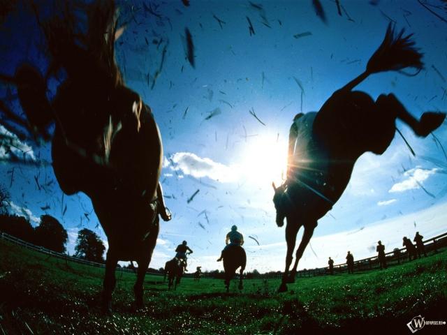 Наездники на лошадях