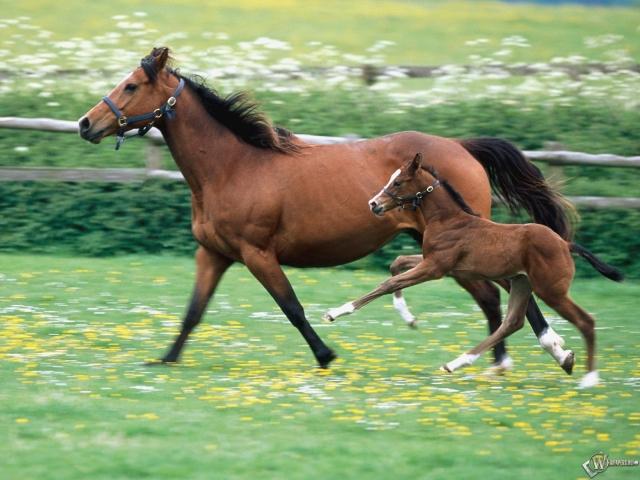 Мать и сын - обе лошади