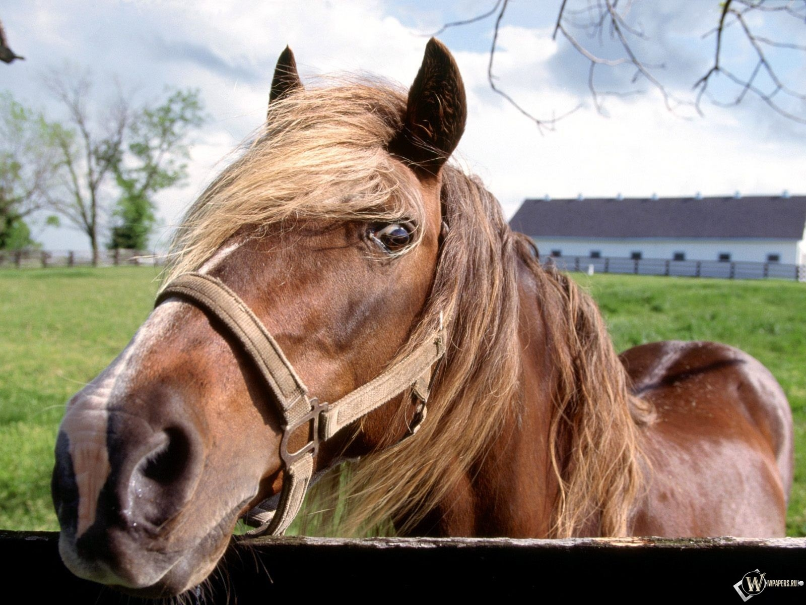 Лошадь в стойле 1600x1200