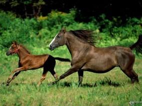Обои Мать и жеребенок: , Лошади