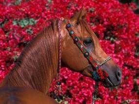 Обои Красивая лошадка: , Лошади