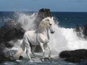 Обои Белый конь на берегу: Скалы, Берег, Белый, Конь, Лошади